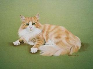 Cat Portraits by Malcolm Studios (VICTORIA)