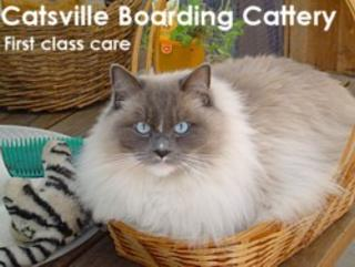 Catsville Boarding Cattery - Healesville 3777 - Ph 03 5962 2616