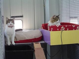 Elle and Barb at Catsville Boarding Cattery