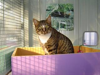 Harry at Catsville Boarding Cattery