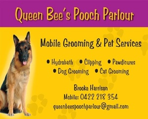 Cat Grooming Melbourne - Queen Bee's Mobile Grooming