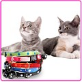 Online cats supplies - keeping your cat cool
